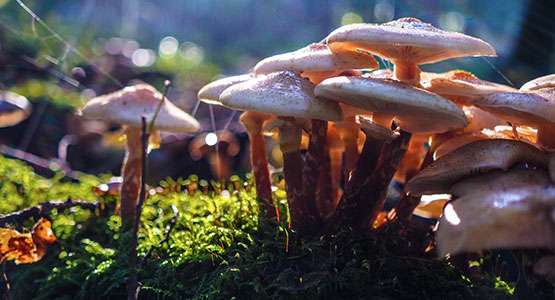 Reasons Why Health Experts Are Obsessed With Medicinal Mushrooms